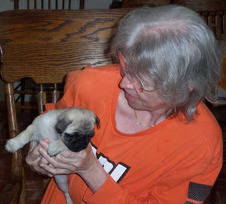Little Sheba the Hug Pug Photo 00008