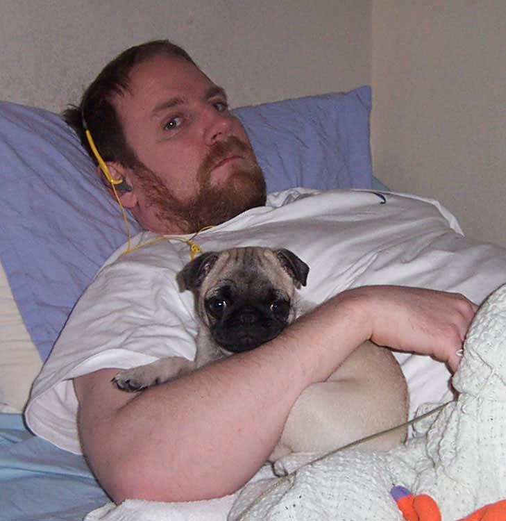 Little Sheba the Hug Pug Photo 00094
