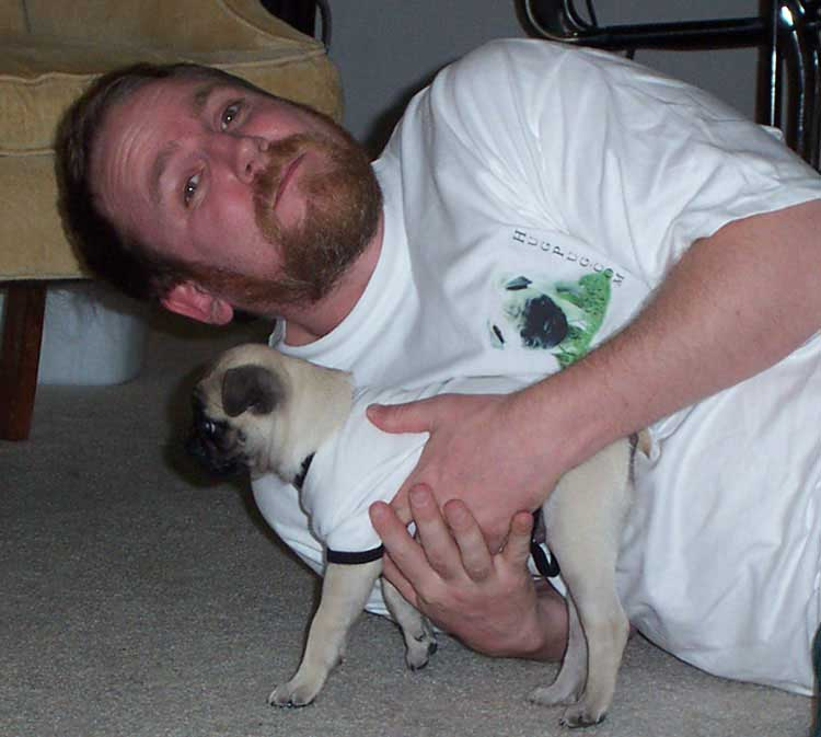 Little Sheba the Hug Pug Photo 00153