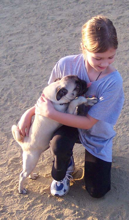 Little Sheba the Hug Pug Photo 01261