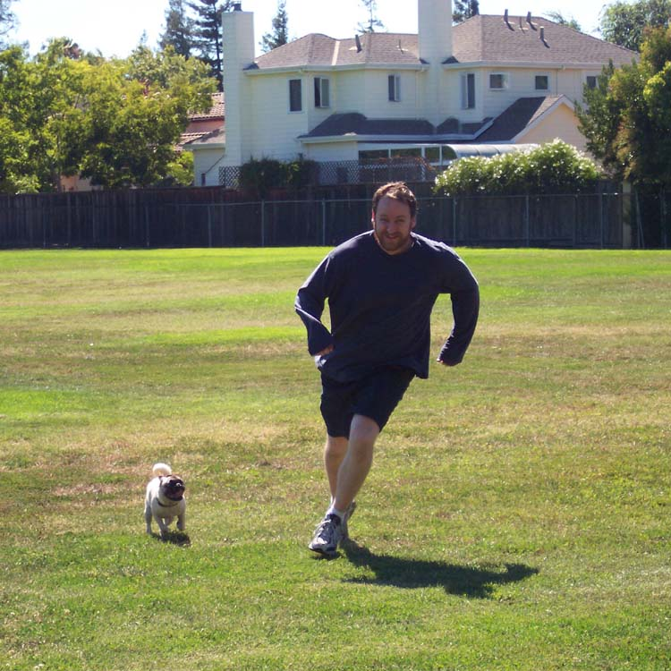 Little Sheba the Hug Pug Photo 01385